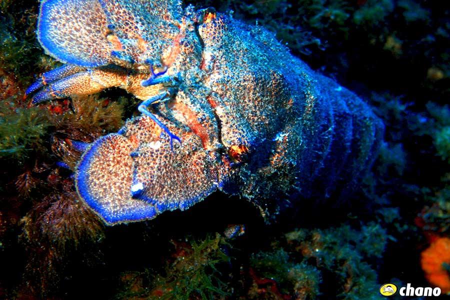 especies marinas en Menorca, Marine species in Menorca